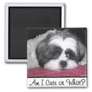 Belle The Shih Tzu Dog Magnet