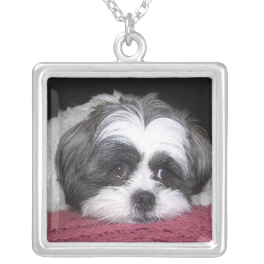 Belle The Shih Tzu Dog Silver Plated Necklace