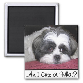 Belle The Shih Tzu Dog Square Magnet