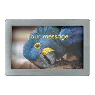 Belt buckle cute blue Hyacinth Macaw parrot