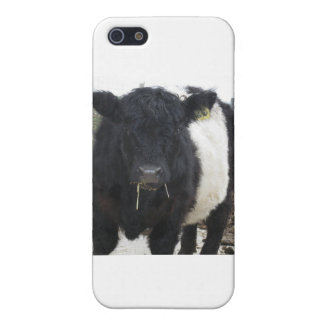 Belted Galloway Cow Eating Hay iPhone 5/5S Cover