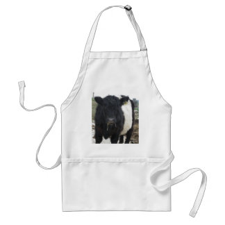 Belted Galloway Cow Eating Hay Standard Apron