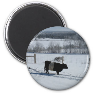 Belted Galloway Cow in a Snowy Landscape Magnet