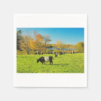 Belted Galloway Cows Grazing On Grass In Fall Paper Serviettes