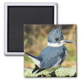 Belted Kingfisher Magnet