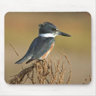Belted Kingfisher Mouse Mat