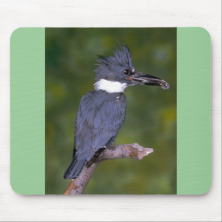 Belted Kingfisher Mousepads