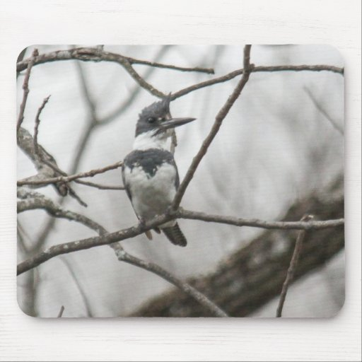 Belted Kingfisher Mousepad