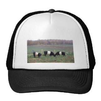 Beltie Cow Herd in Fall Trucker Hat