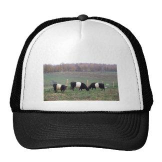 Beltie Cow Herd in Fall Trucker Hats