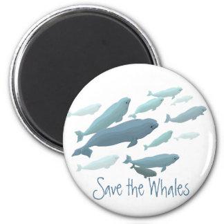 Beluga Fridge Magnet Custom Beluga Whale Magnet