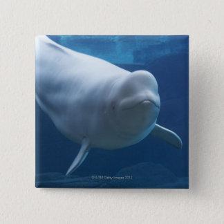 Beluga whale (Delphinapterus leucas) 15 Cm Square Badge
