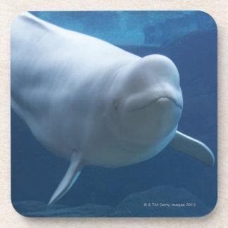 Beluga whale (Delphinapterus leucas) Drink Coaster