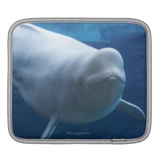 Beluga whale (Delphinapterus leucas) iPad Sleeve