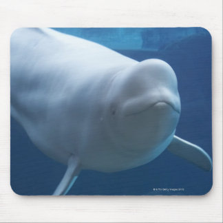 Beluga whale (Delphinapterus leucas) Mouse Mat