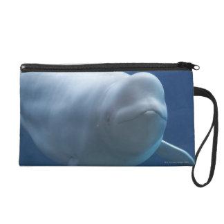 Beluga whale (Delphinapterus leucas) Wristlet