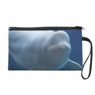 Beluga whale (Delphinapterus leucas) Wristlet Clutch