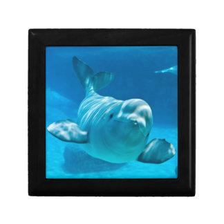 Beluga Whale Gift Box