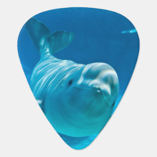 Beluga Whale Plectrum