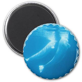 Beluga Whales Magnet Fridge Magnets