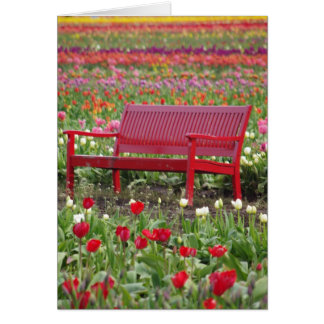 Bench in a Field Card