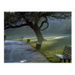 Bench, tree, Regents Park, London, England Postcard