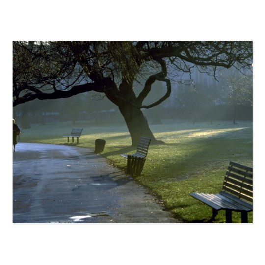 Bench, tree, Regents Park, London, England Postcard