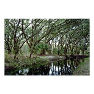 Bending Oaks. Osceola County, Fl. Photo Art