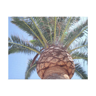 Beneath A Mediterranean Palm Thin Frame Canvas Print