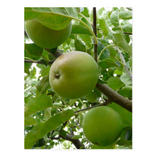 Beneath the Apple Tree Postcard