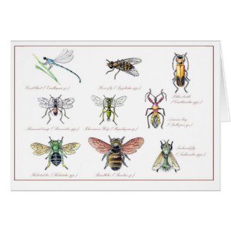 Beneficial Garden Insects Card
