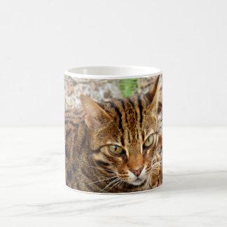 Bengal Cat 001 Coffee Mugs