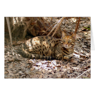 Bengal Cat 013 Card