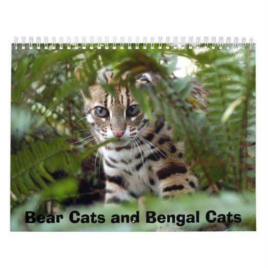 Bengal Cat 022, Bear Cats and Bengal Cats