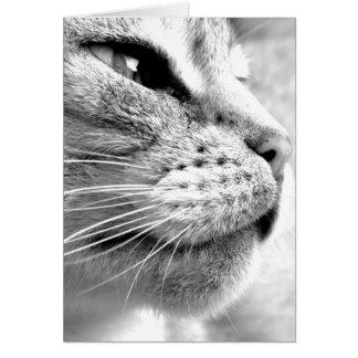 Bengal Cat Card