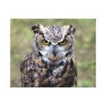 Bengal eagle-owl canvas prints