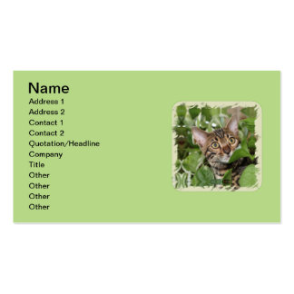 BENGAL KITTEN IN POTHOS PACK OF STANDARD BUSINESS CARDS