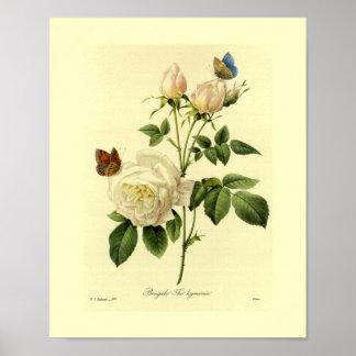 Bengal Rose Botanical Floral Posters