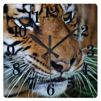 Bengal Tiger Close Up Africa Square Wall Clock