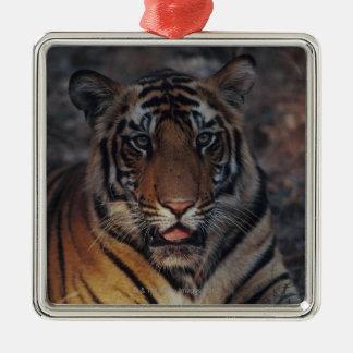 Bengal Tiger Cub Christmas Ornament