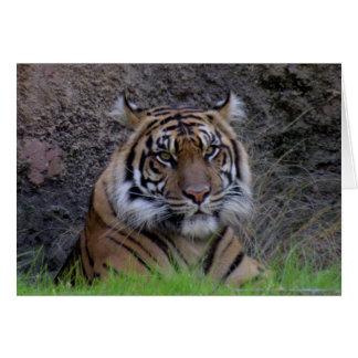 Bengal Tiger Greeting Card (4765)