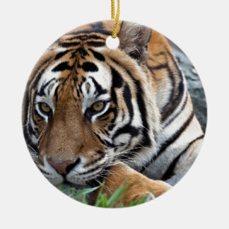 Bengal Tiger in grass Christmas Tree Ornaments