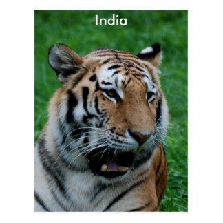 Bengal Tiger in India Postcard