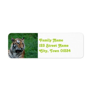 Bengal Tiger in India Return Address Label