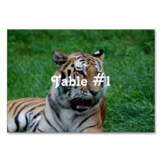 Bengal Tiger in India Table Cards