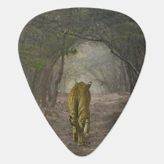 Bengal Tiger in the forest in Ranthambore Plectrum