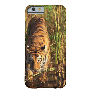 Bengal tiger in wetlands barely there iPhone 6 case