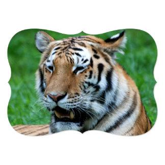 Bengal Tiger Card