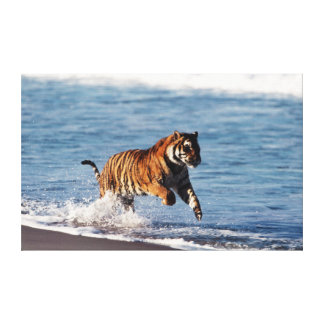 Bengal Tiger (Panthera Tigris) Canvas Print