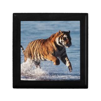 Bengal Tiger (Panthera Tigris) Gift Box